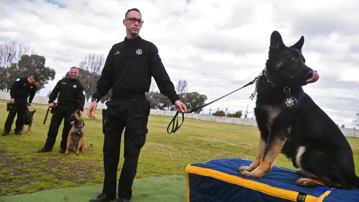 Plenty of bite with these barks as three new K9 teams join Fresno PD
