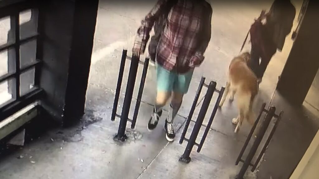 San Francisco woman's pet dog stolen in front of market on video