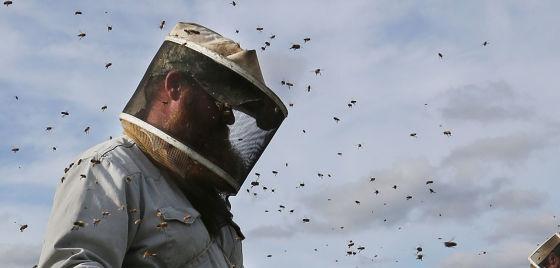 Drop in honey prices clouds outlook Kern's almond industry