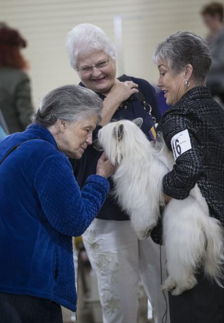 PHOTO GALLERY: All breed Dog show at the Kern County Fair