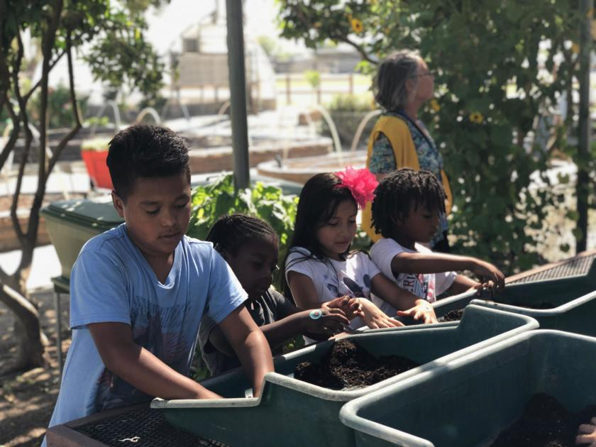 The root of learning: McKinley students get hands-on gardening experience through Agriculture Academy